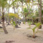 Adinarayan Wooden Cottages - Premises